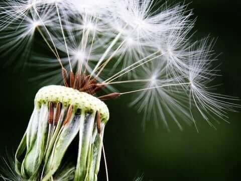 Seasonal Allergies And Your Dental Health